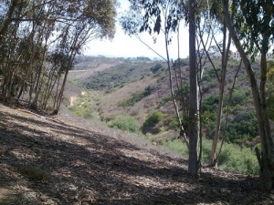 Trail Running at UCSD Trails