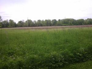 Des Moines Trail Field
