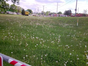 Des Moines Trail Weeds