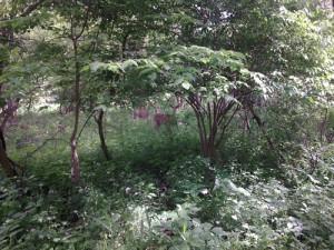 Des Moines Trail Deer